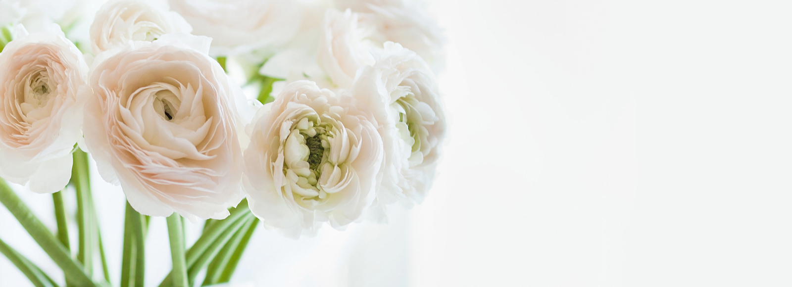 Close up of white flowers with white space on right