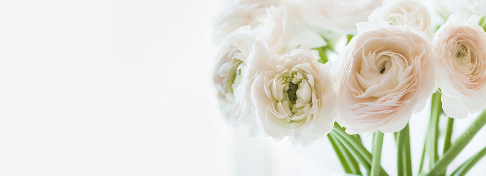Close up of white flowers on left side with white space on right