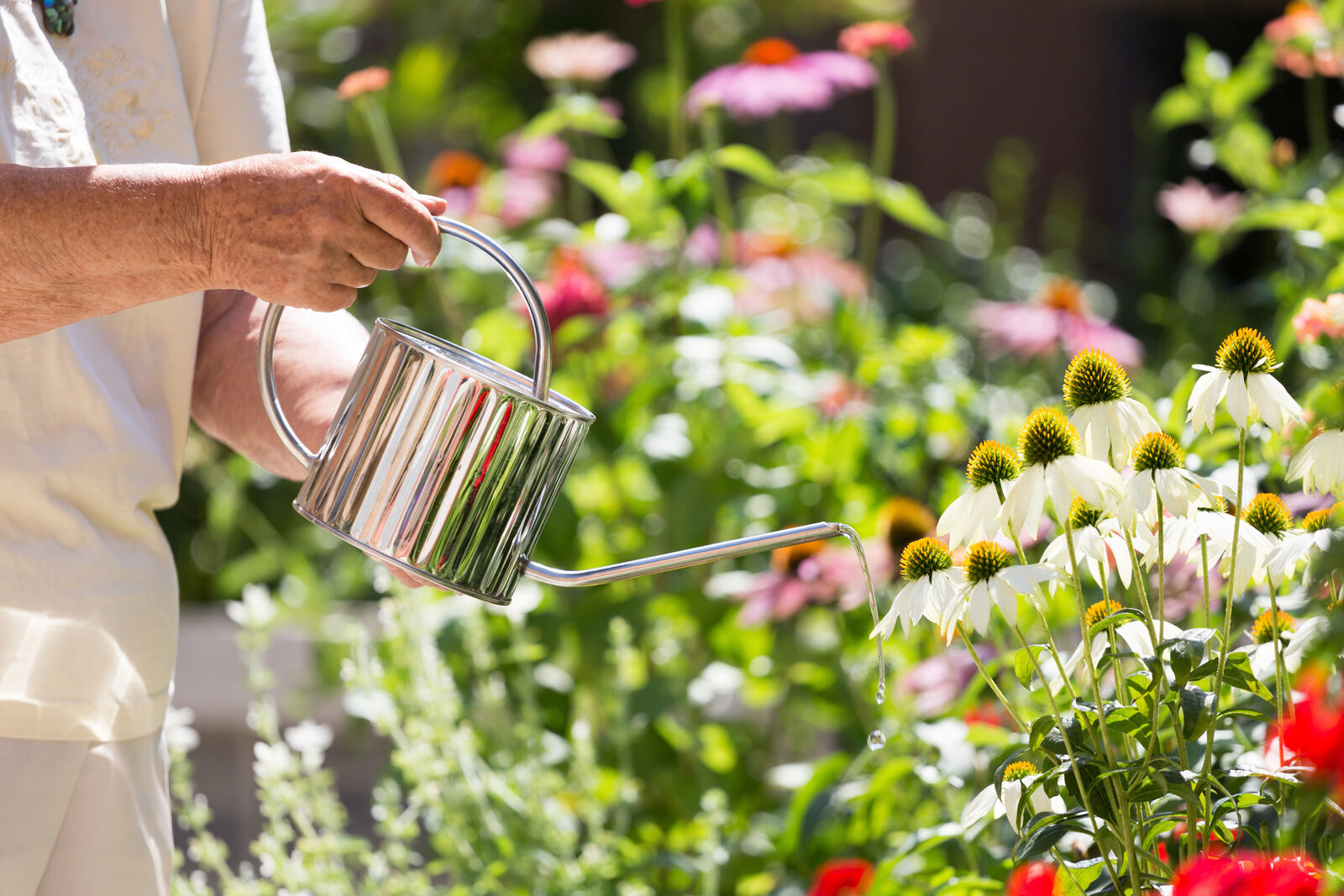 Senior watering flowers in the courtyard at Amica Edgemont Village